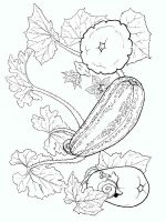 Melon-fruits-coloring-pages-2