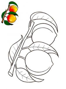 Peach-fruits-coloring-pages-9