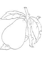 Pear-fruits-coloring-pages-16