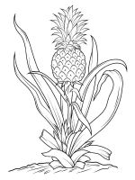 Pineapple-fruits-coloring-pages-12