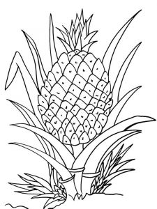 Pineapple-fruits-coloring-pages-4