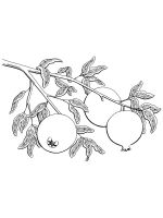 Pomegranate-coloring-pages-5
