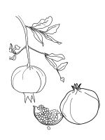 Pomegranate-coloring-pages-7