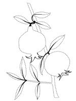 Pomegranate-fruits-coloring-pages-2
