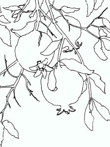 Pomegranate-fruits-coloring-pages-8