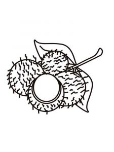 Rambutan-fruits-coloring-pages-2
