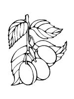 plum-coloring-pages-4