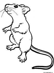 Mouse-coloring-pages-6
