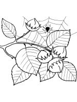 Nuts-coloringpages-9