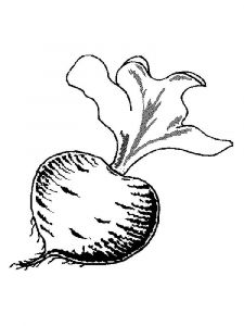 Vegetables-Beet-coloring-page-10