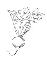 Vegetables-Beet-coloring-page-2