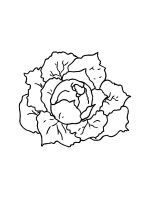 Cabbage-coloring-pages-23