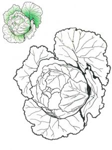 Vegetables-Cabbage-coloring-page-3