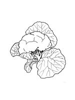 Cauliflower-coloring-pages-9