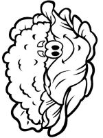 Vegetables-Cauliflower-coloring-page-1