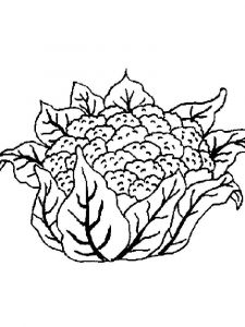 Vegetables-Cauliflower-coloring-page-8