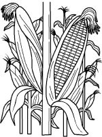 Vegetables-Corn-coloring-page-10