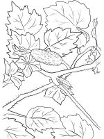 Cucumber-coloring-pages-14
