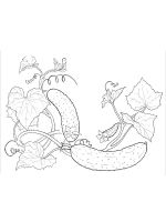 Cucumber-coloring-pages-30