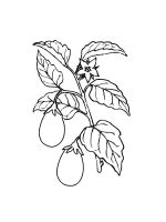 Eggplant-coloring-pages-21