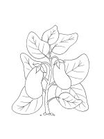 Eggplant-coloring-pages-23