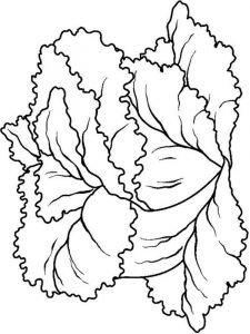 Vegetables-Lettuce-coloring-page-2
