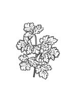 Parsley-coloring-pages-10