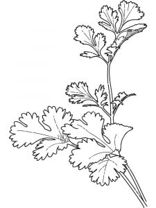 Vegetables-Parsley-coloring-page-1