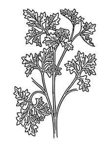 Vegetables-Parsley-coloring-page-4