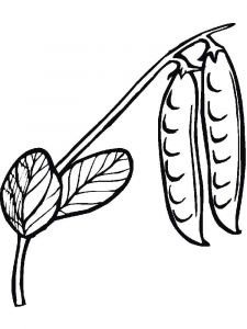 Vegetables-Peas-coloring-page-11