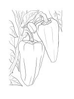 Pepper-coloring-pages-15