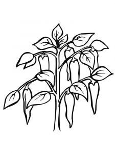 Vegetables-Pepper-coloring-page-4