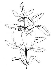 Vegetables-Pepper-coloring-page-5
