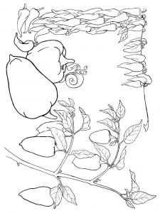 Vegetables-Pepper-coloring-page-7