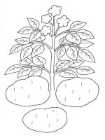 Vegetables-Potato-coloring-page-1