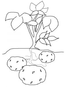 Vegetables-Potato-coloring-page-6