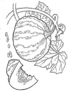 Vegetables-Pumpkin-coloring-page-10
