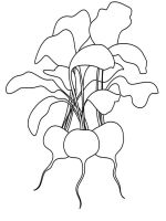 Vegetables-Radish-coloring-page-9