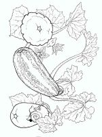 Vegetables-Squash-coloring-page-4