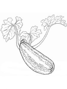 Vegetables-Squash-coloring-page-8