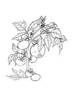 Tomato-coloring-pages-33