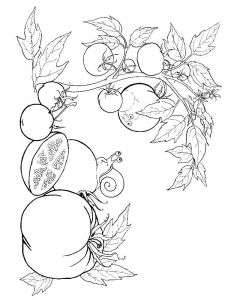 Vegetables-Tomato-coloring-page-2