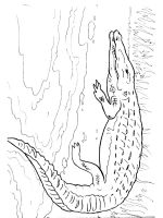 African-animals-coloring-pages-12