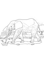 African-animals-coloring-pages-5
