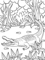 Alligator-coloring-pages-3