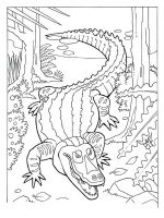 Alligator-coloring-pages-8