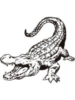 Alligator-coloring-pages-9