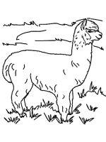 Alpaca-coloring-pages-11