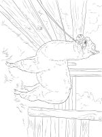 Alpaca-coloring-pages-2