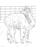 Alpaca-coloring-pages-6